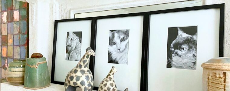 Black and white photos of rescue cats on mantel.